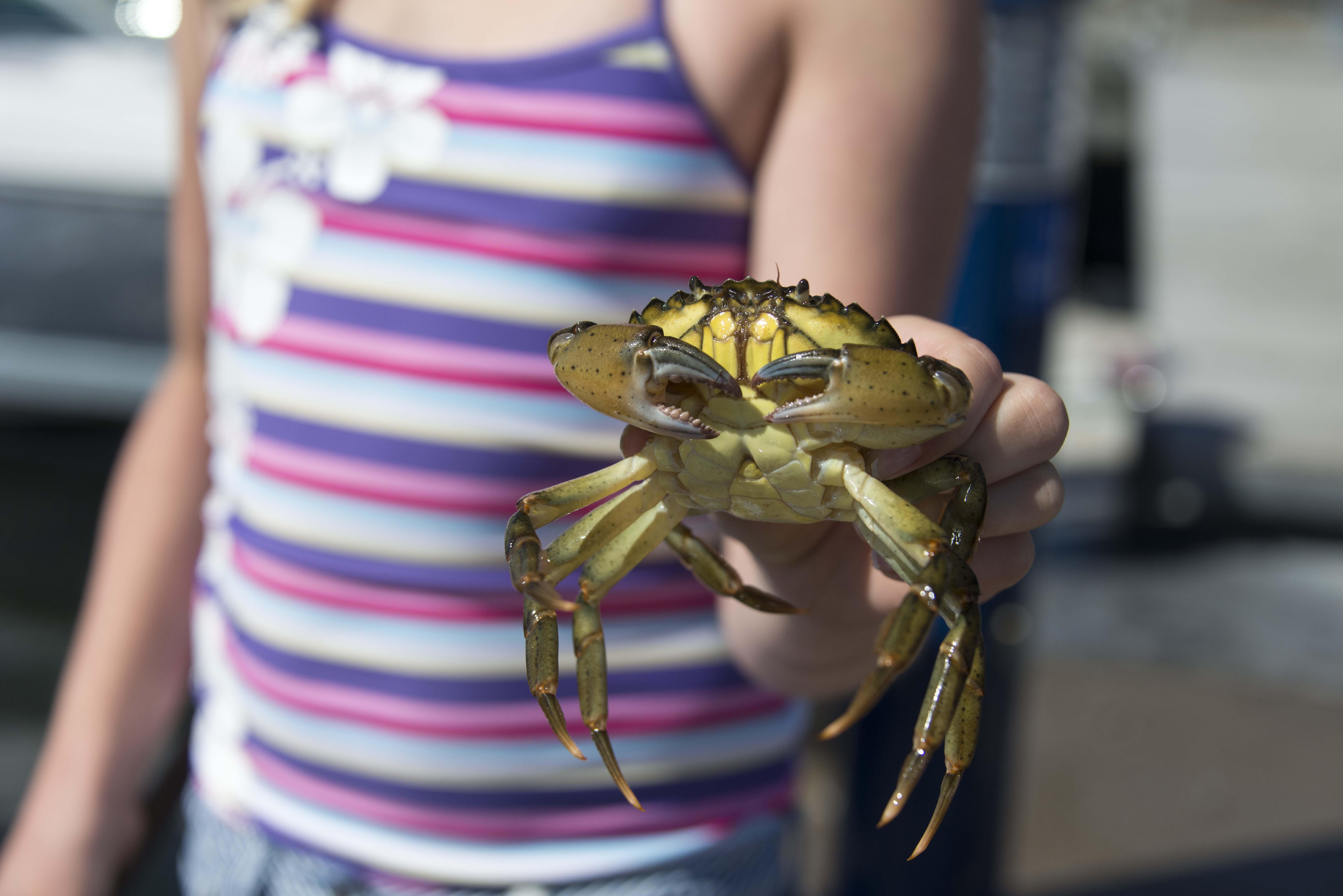En flicka håller en liten krabba i sin hand