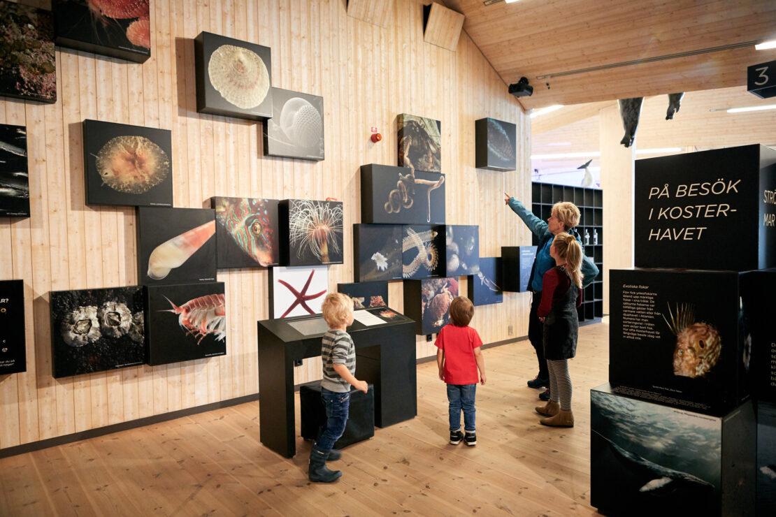 Barnfamilj tittar på väggutställning inne på naturum Kosterhavet